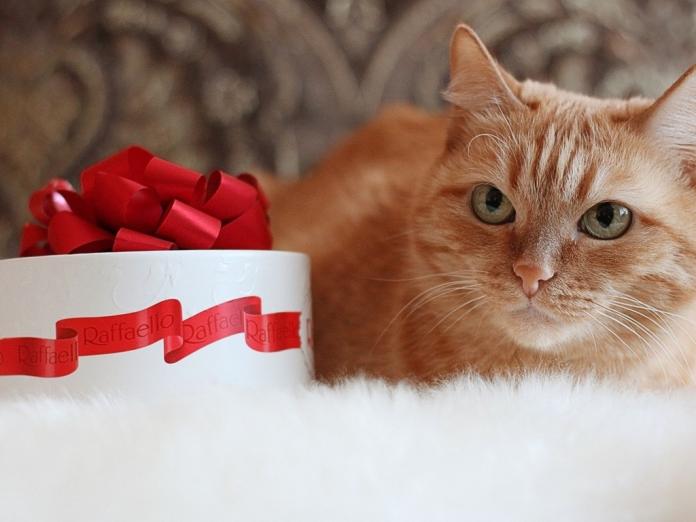Photo of День эрмитажного кота