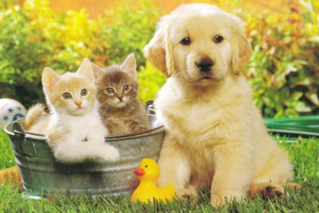 Photo of Налог на домашних животных в России