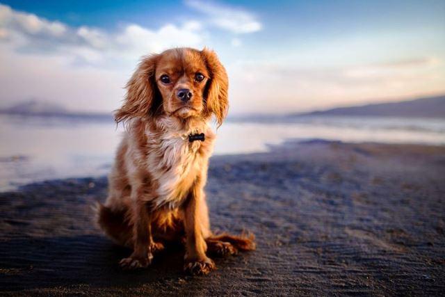 Photo of Будут ли чипировать домашних собак с?