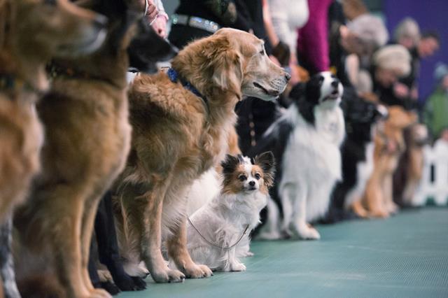 Photo of Самые популярные выставки собак в России