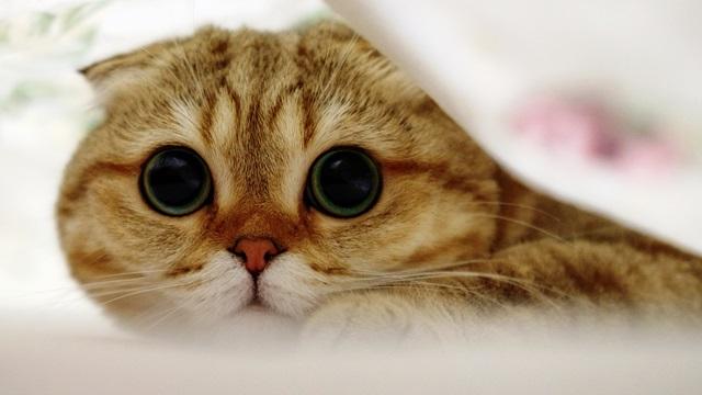 Photo of Коты и кошки с большими глазами